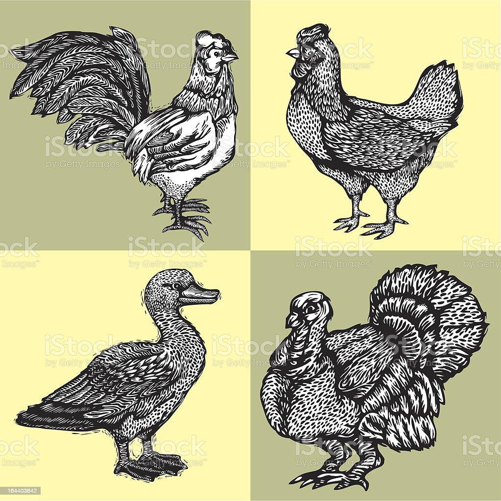 POULTRY royalty-free stock vector art