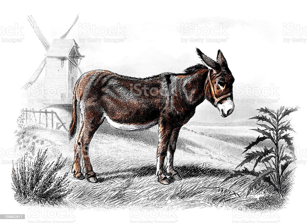 19th century colour engraving of a donkey royalty-free stock vector art
