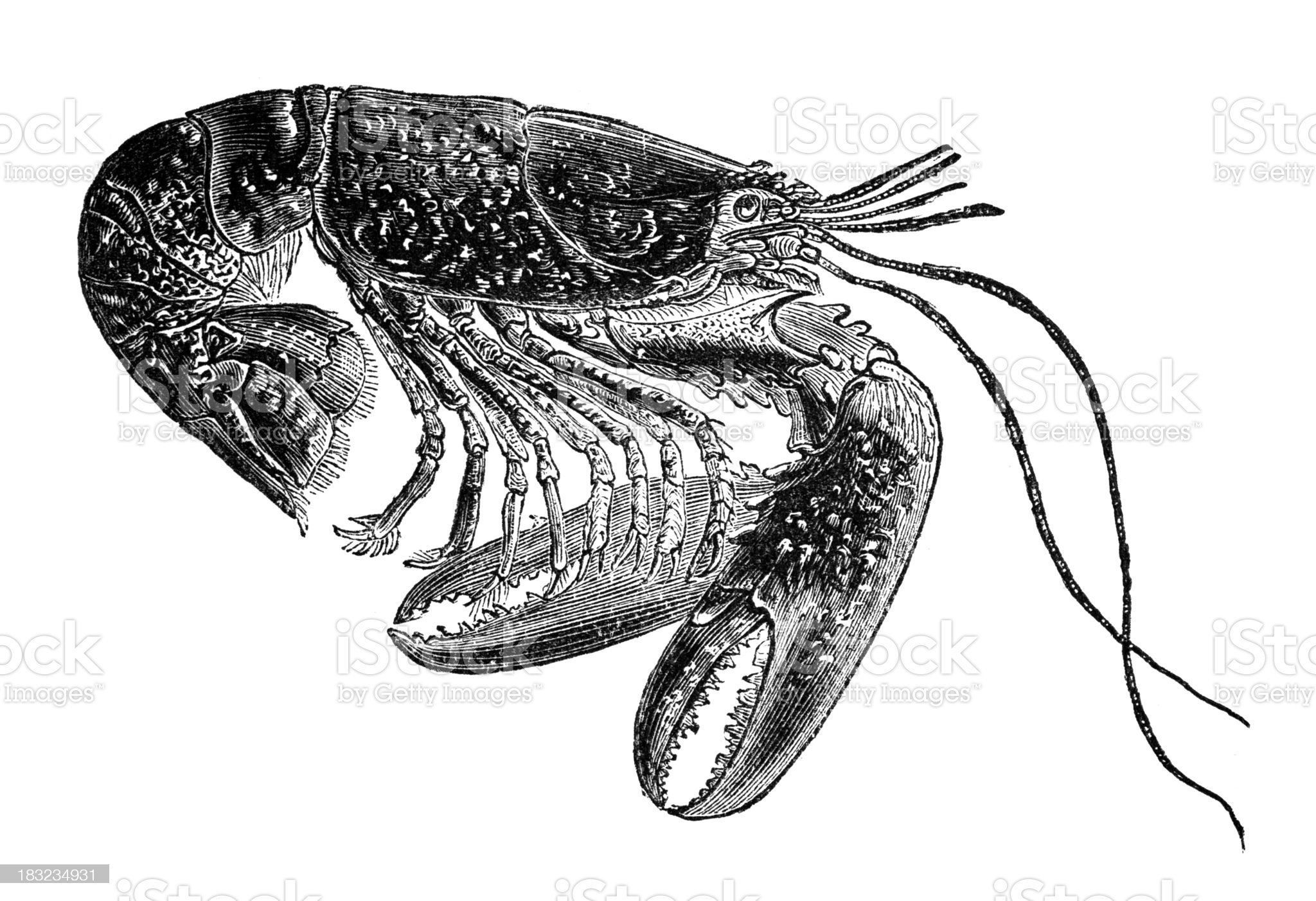 19th century engraving of a lobster royalty-free stock vector art