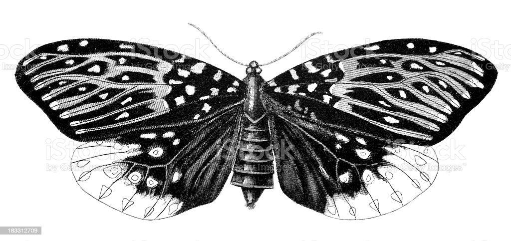 19th century engraving of a moth vector art illustration