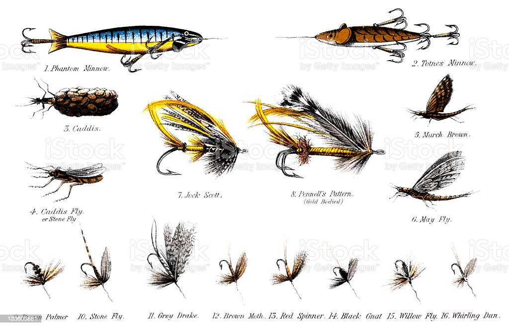 19th century illustration of some salmon and trout flies royalty-free stock vector art