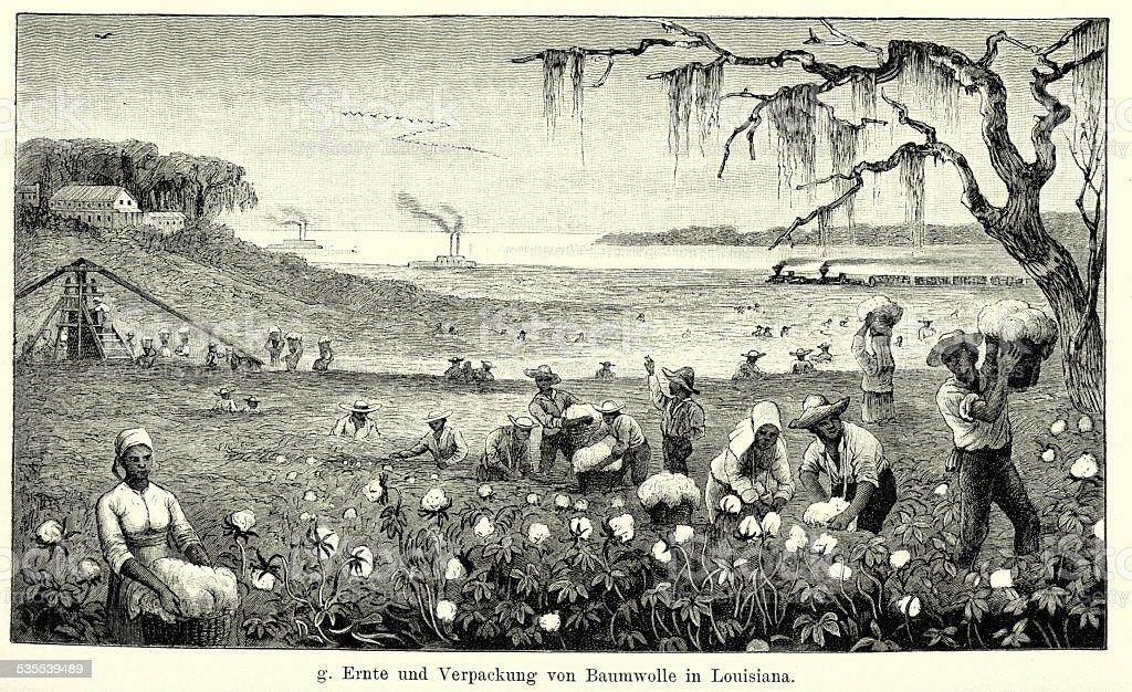 19th Century North America -  Harvesting cotton in Louisiana vector art illustration