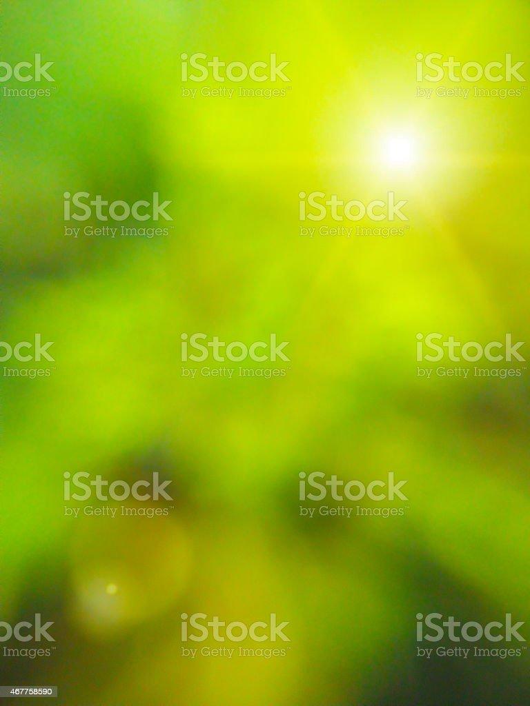 Abstract background ,Blur leaves,Sunlight effect vector art illustration