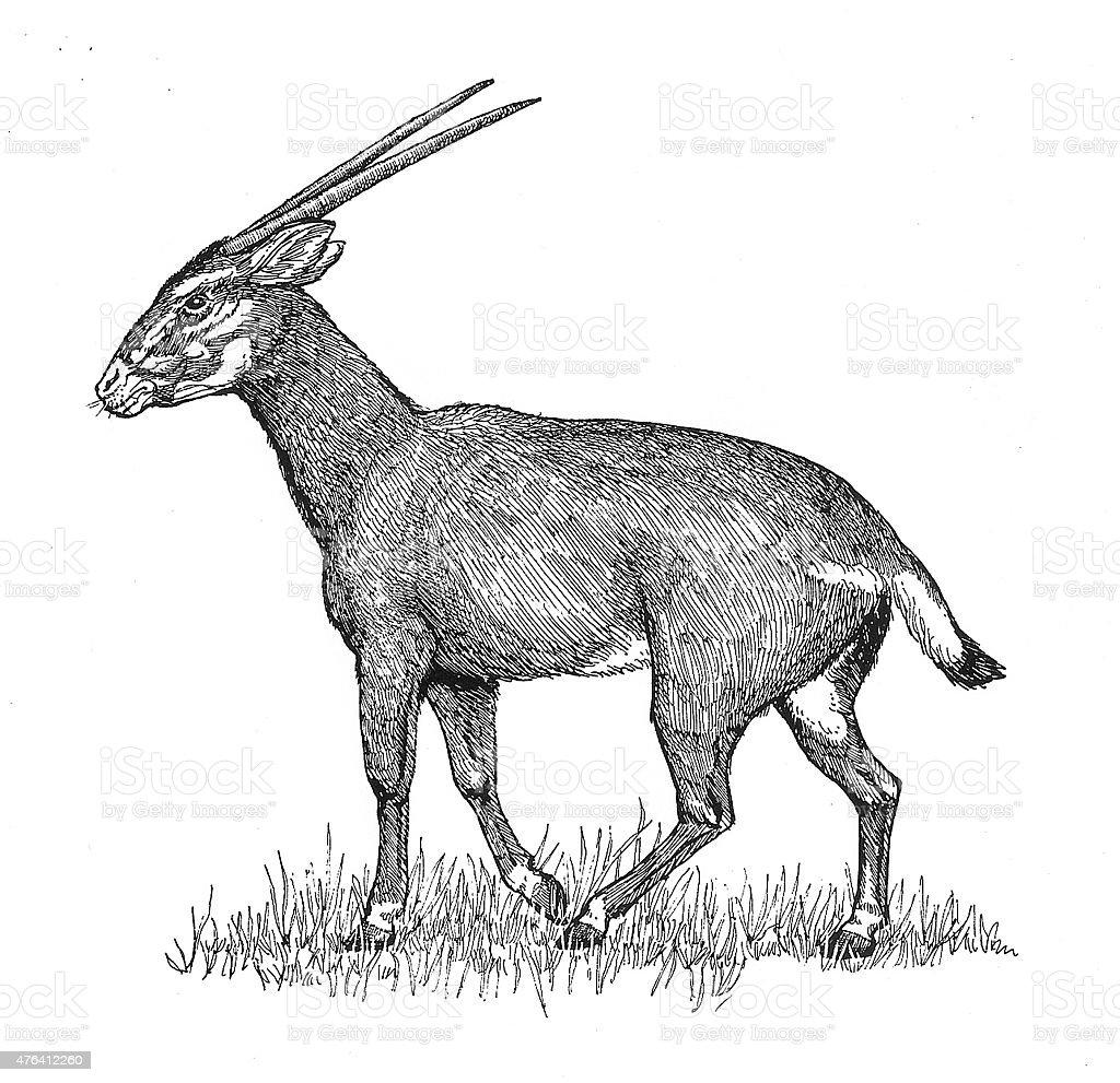 Afrikanischer Antelope Lizenzfreies vektor illustration
