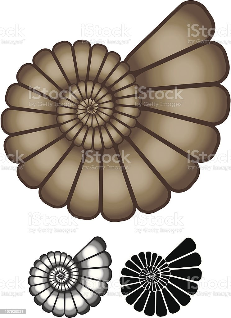 Ammonite fossil vector art illustration
