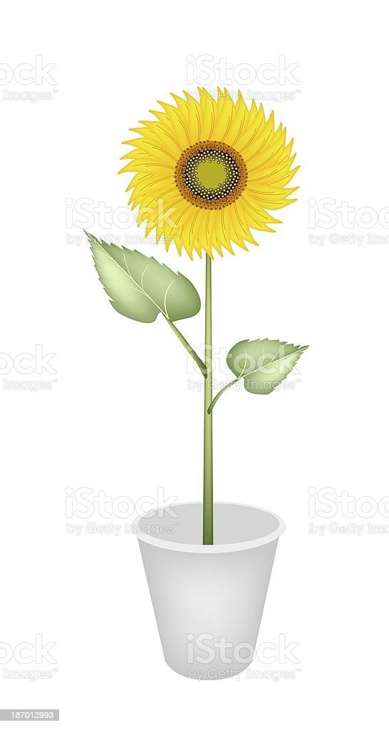 An Elegant Perfect Sunflower in A Flower Pot royalty-free stock vector art