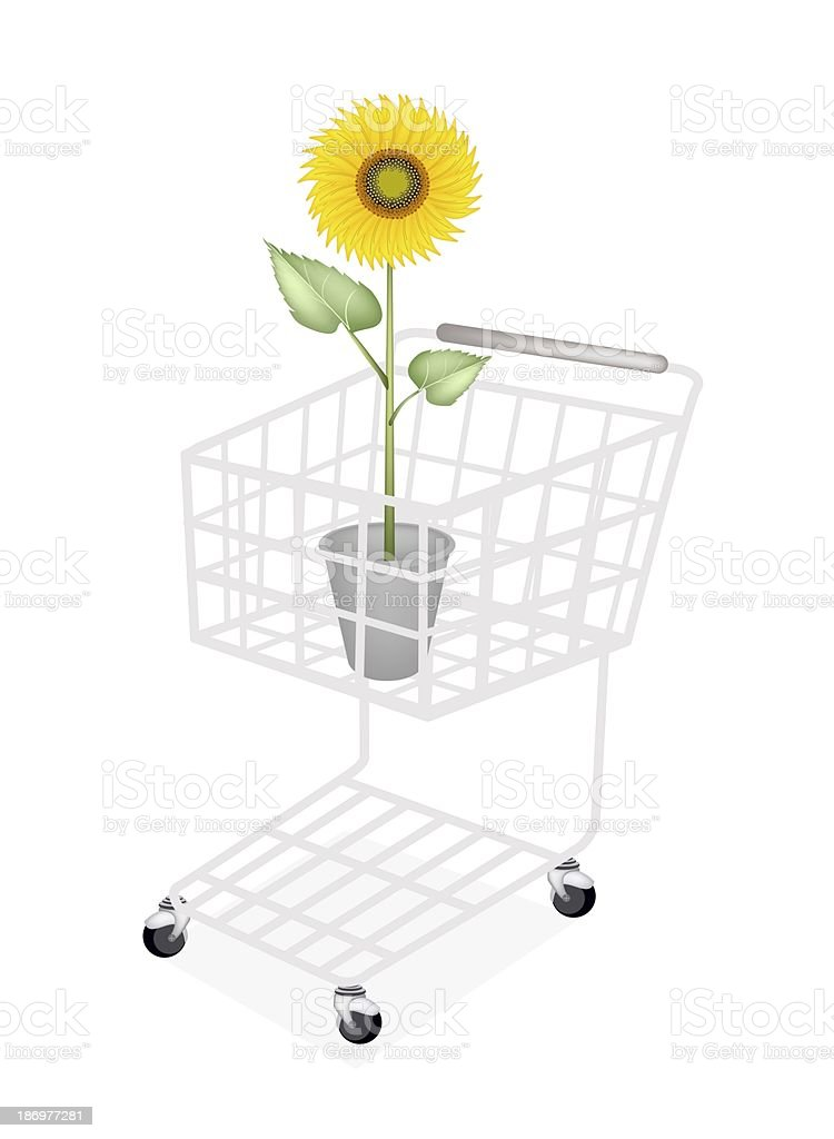 An Elegant Perfect Sunflower in A Shopping Cart royalty-free stock vector art