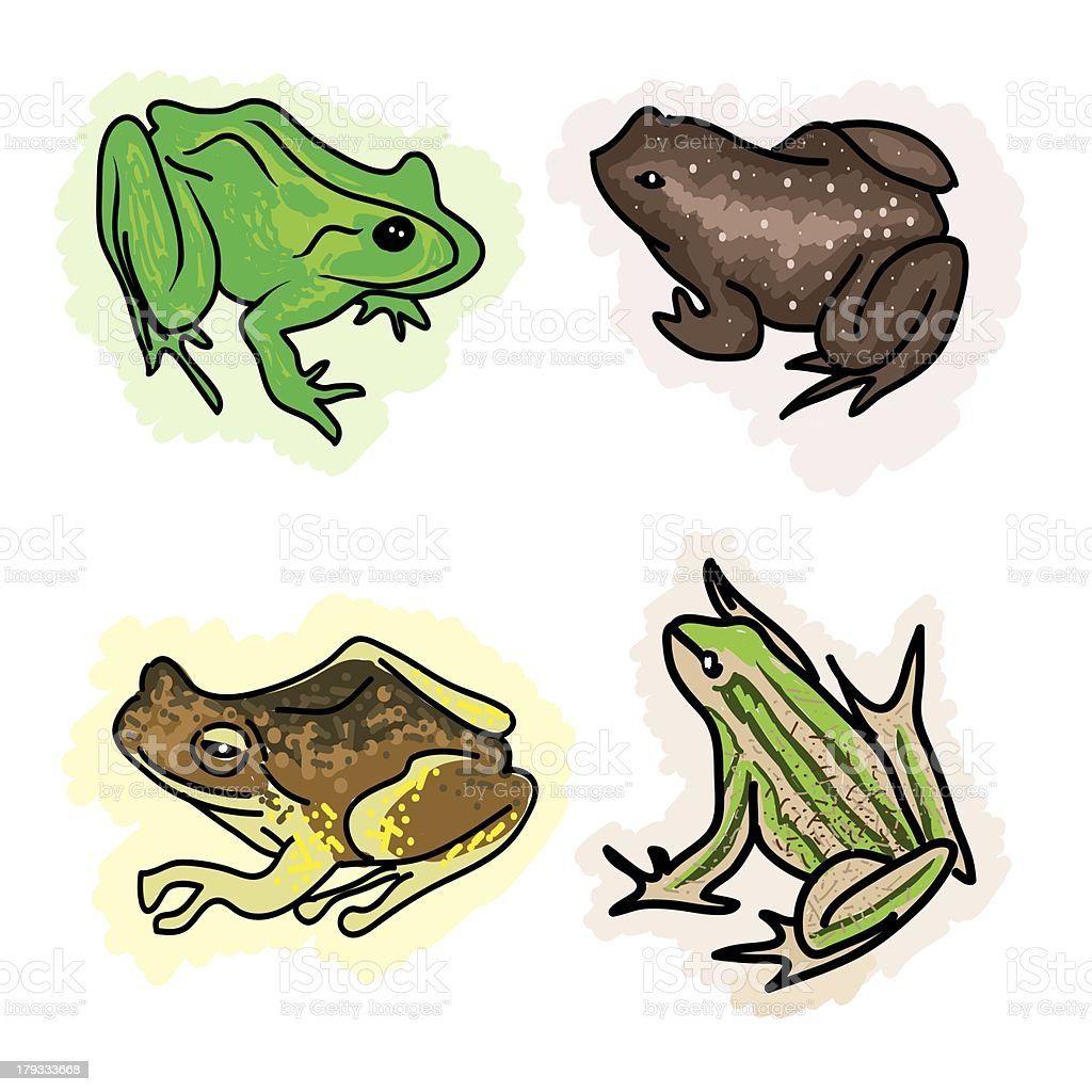 An Illustration Four Different Type of Frogs vector art illustration