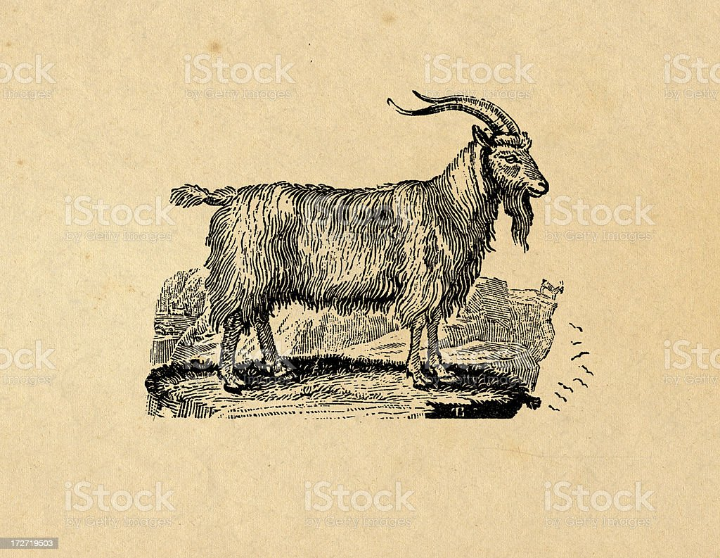 An illustration of a goat on a tan background vector art illustration
