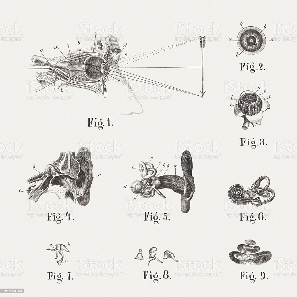 Anatomy of the human eye and ear, published in 1861 vector art illustration