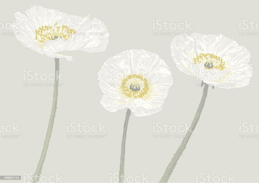 Anemone vector art illustration