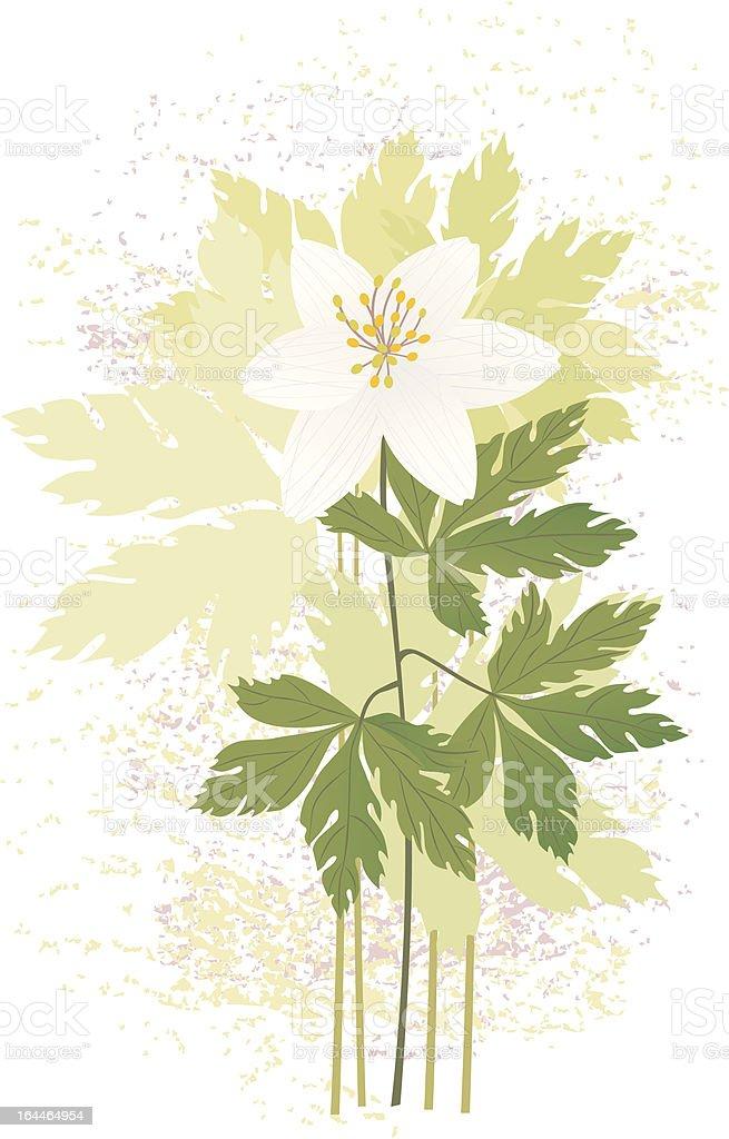 Anemone royalty-free stock vector art