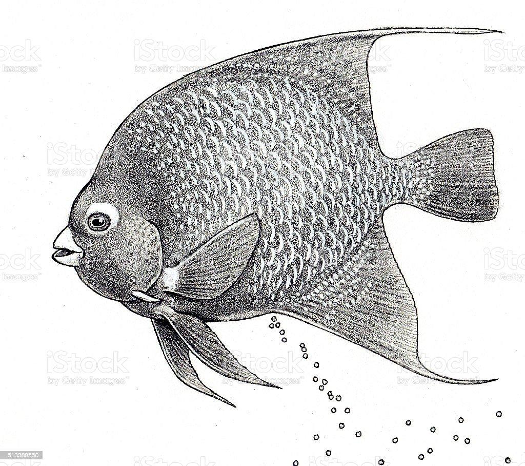 Angel Fisch Lizenzfreies vektor illustration