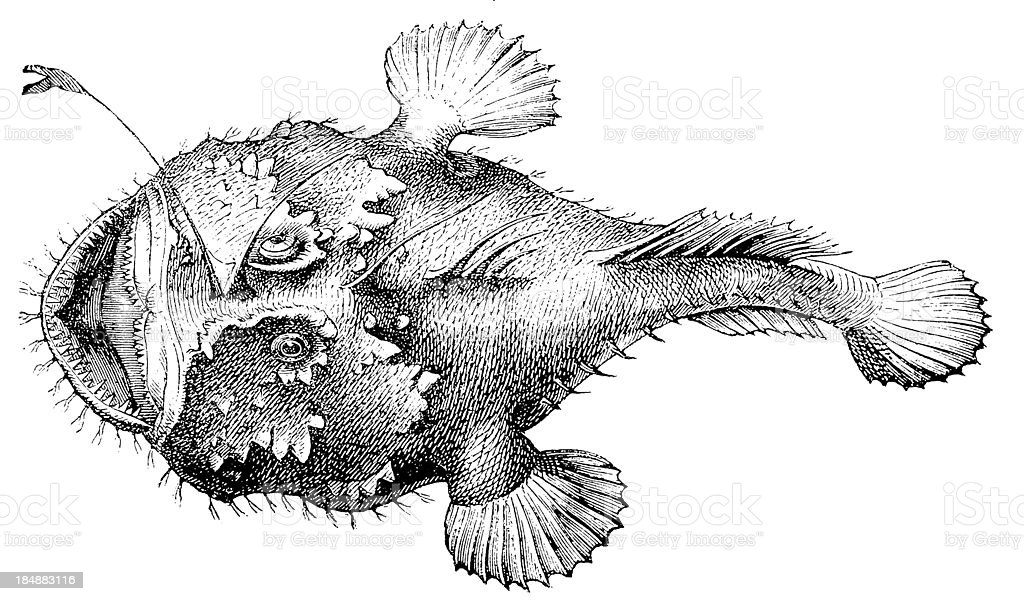 Angler, Fishing-frog, Frog-fish or Sea-devil (Lophius Piscatorius) vector art illustration