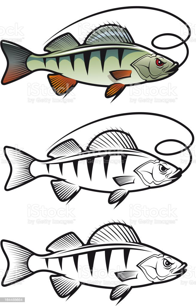 Angry perch fish vector art illustration
