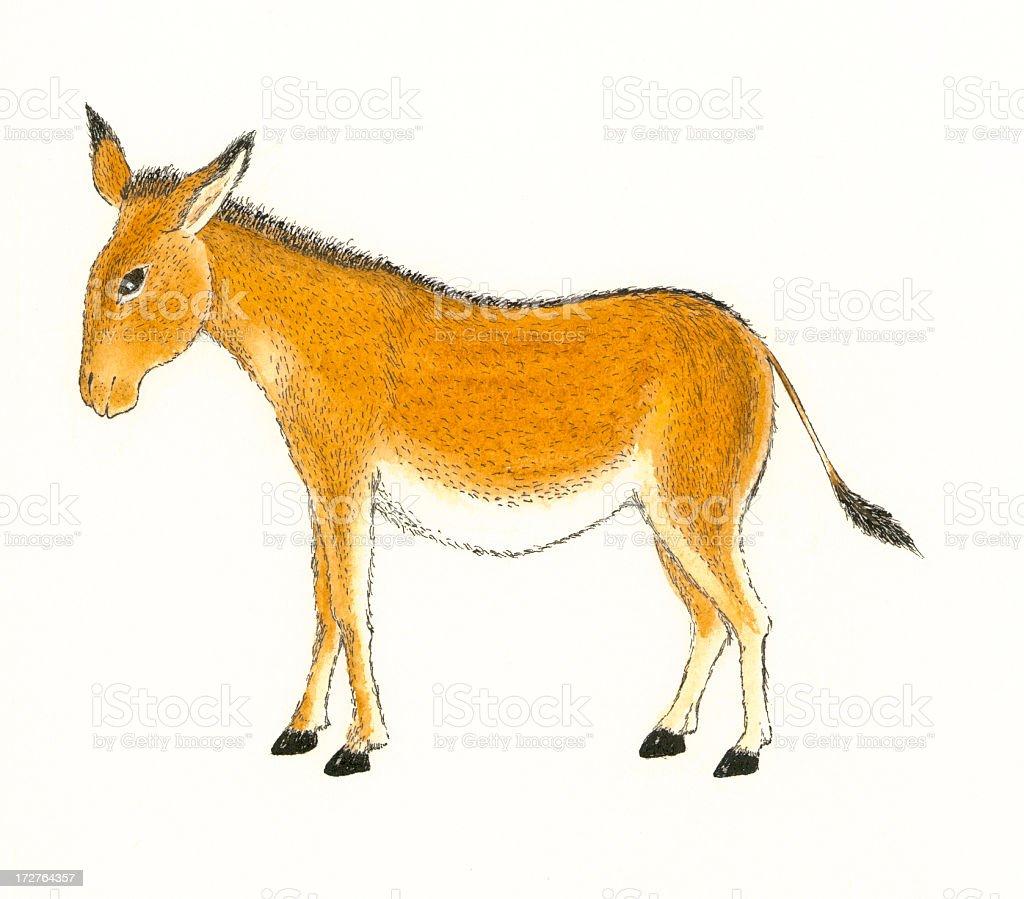Animal. royalty-free stock vector art