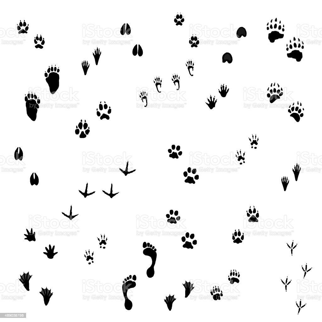 Animal Tracks vector art illustration