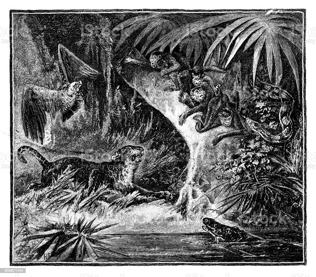 Animals in the jungle vector art illustration