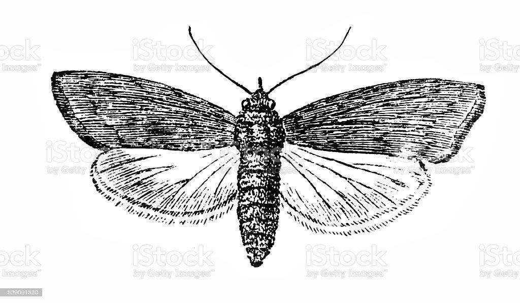 Ant bee vector art illustration