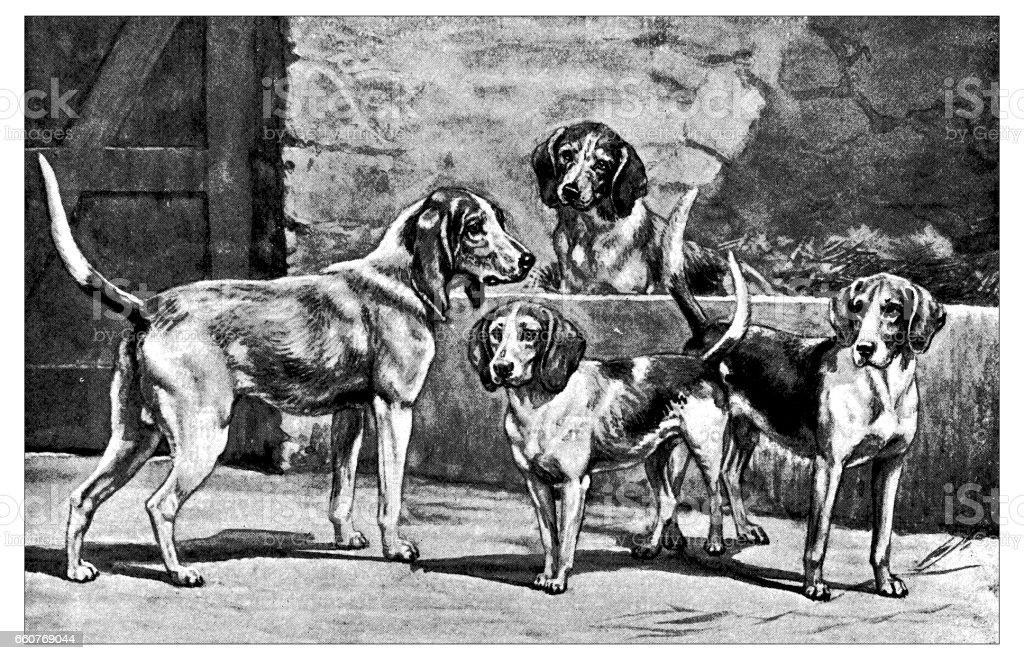 Antique animals illustration: Dogs vector art illustration