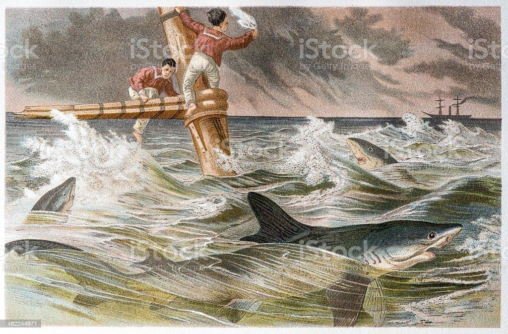 Antique color illustration of shipwreck with blue shark (Prionace glauca) vector art illustration