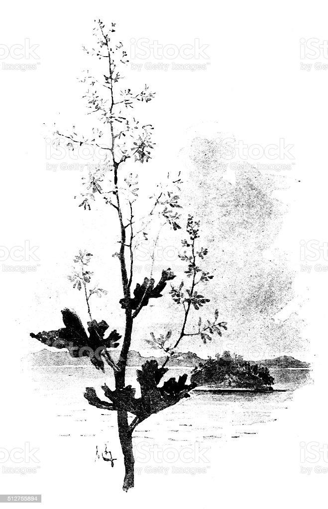 Antique dotprinted watercolor illustration of Japan: Plant and landscape vector art illustration