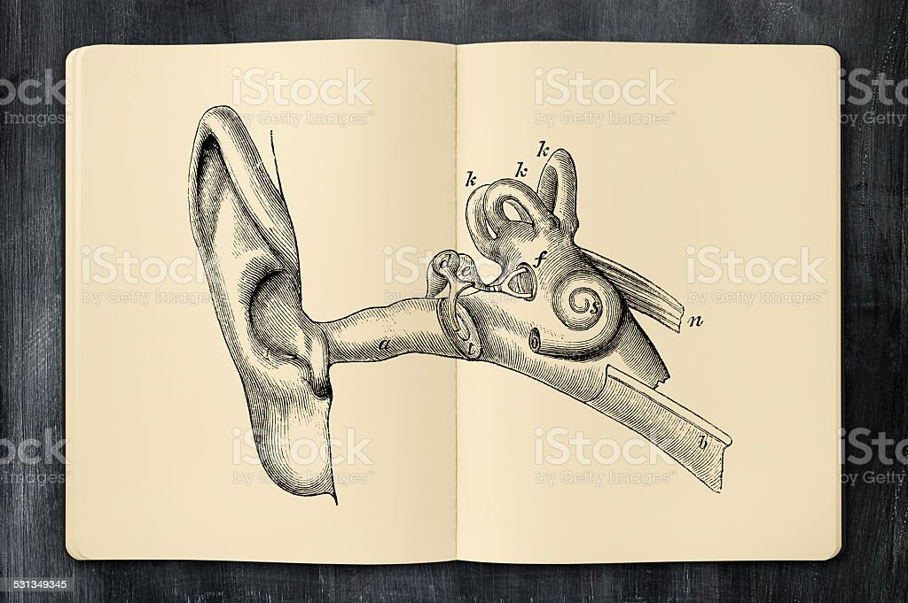 Antique ear illustration in opened notebook vector art illustration