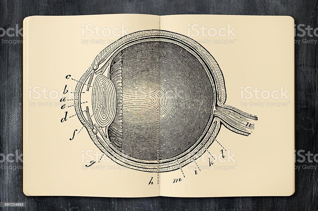 Antique eye illustration in opened notebook vector art illustration