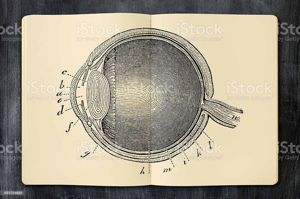 Antique eye illustration in opened notebook vector art illustration