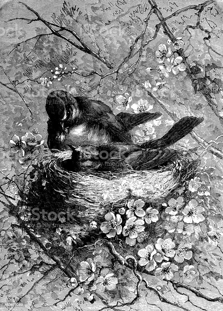Antique illustration of a bird's life (series) royalty-free stock vector art