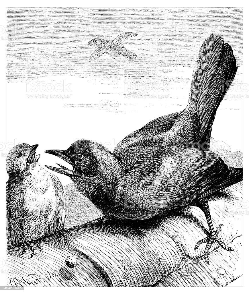 Antique illustration of birds vector art illustration