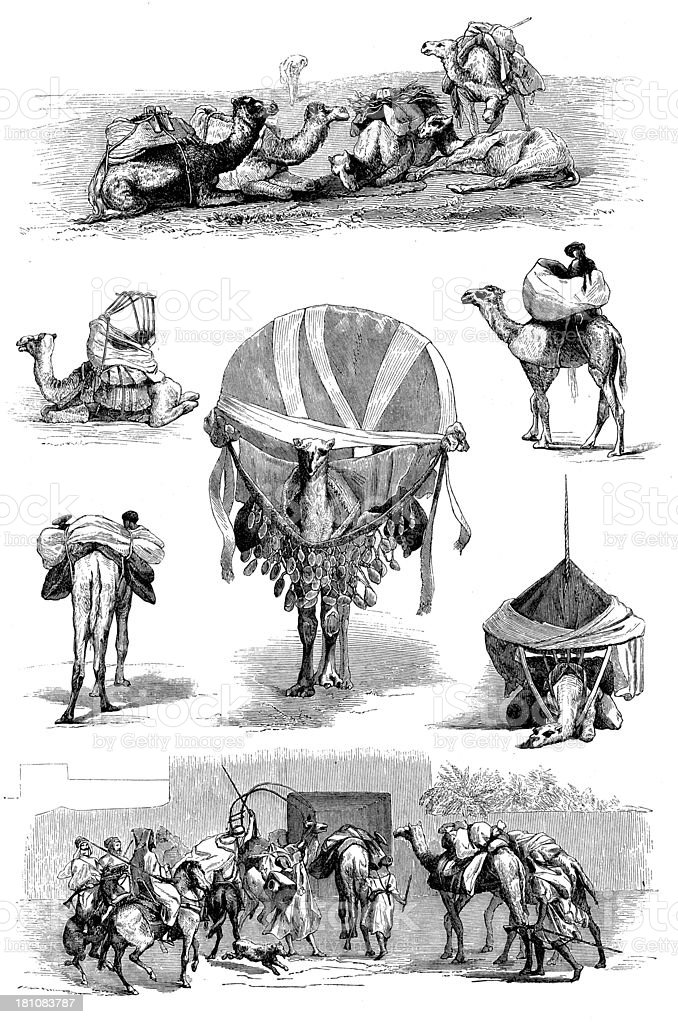 Antique illustration of camel royalty-free stock vector art