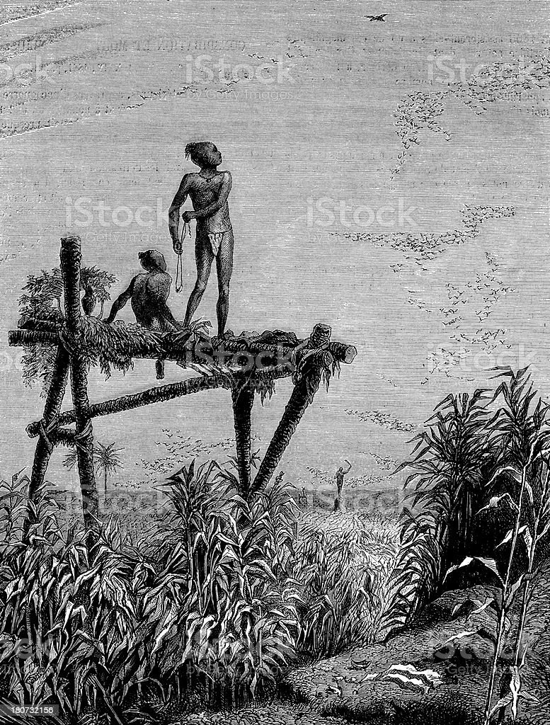 Antique illustration of children protecting crop field from birds royalty-free stock vector art