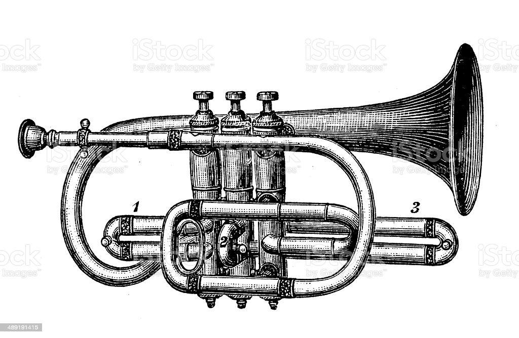 Antique illustration of cornet vector art illustration