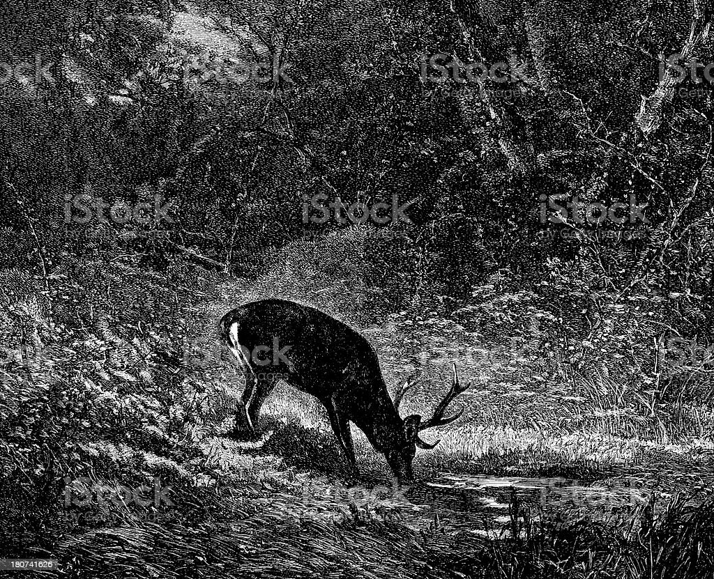 Antique illustration of deer in woods royalty-free stock vector art