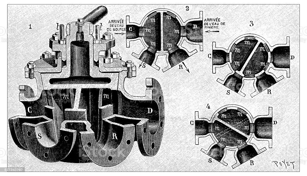 Antique illustration of double valve vector art illustration