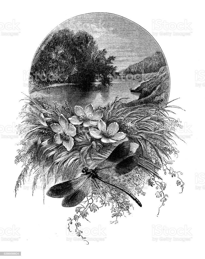 Antique illustration of dragon fly vector art illustration