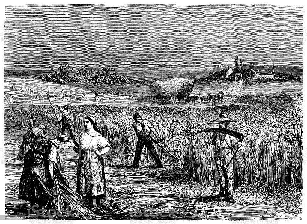 Antique illustration of farmers working vector art illustration