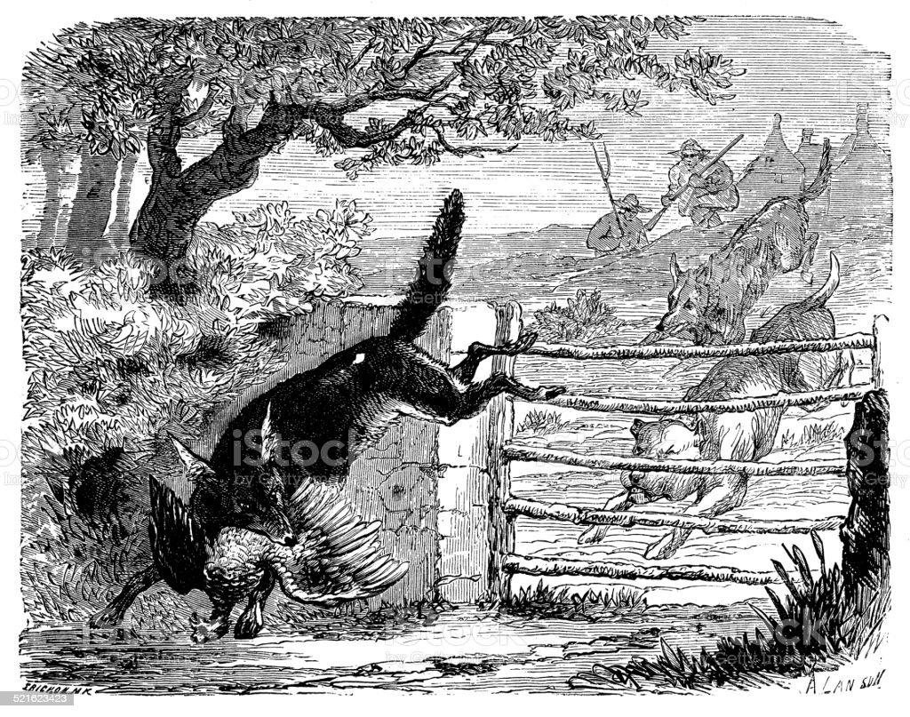 Antique illustration of fox eating bird hunted vector art illustration