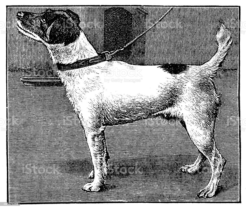 Antique illustration of fox-terrier dog royalty-free stock vector art