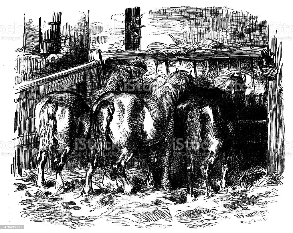 Antique illustration of horses' back royalty-free stock vector art