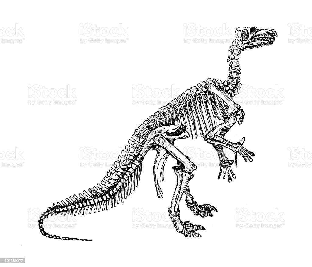 Antique illustration of Iguanodon vector art illustration