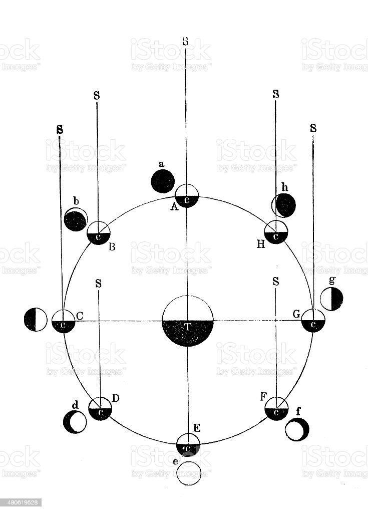 Antique illustration of moon phases vector art illustration