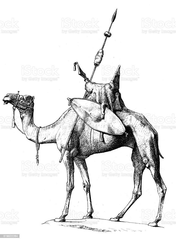 Antique illustration of nubian dromedary with its regalia vector art illustration