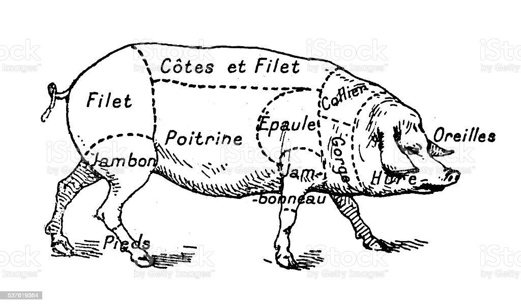 Antique illustration of pork swine pig meat section (french) vector art illustration