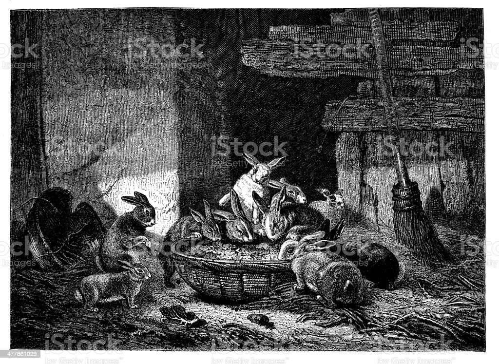 Antique illustration of rabbits eating royalty-free stock vector art