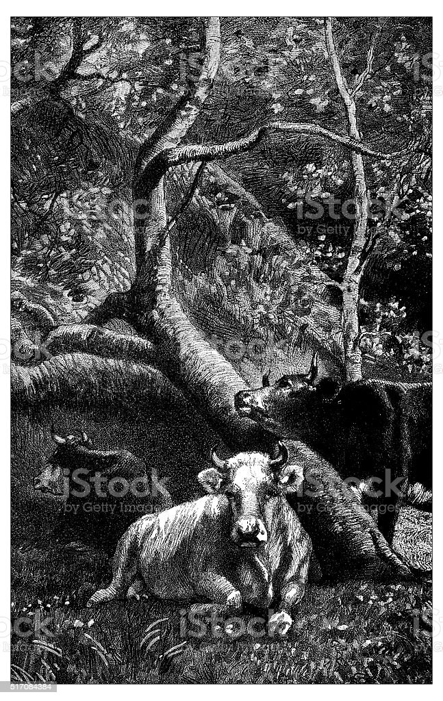 Antique illustration of three cows in the woods vector art illustration