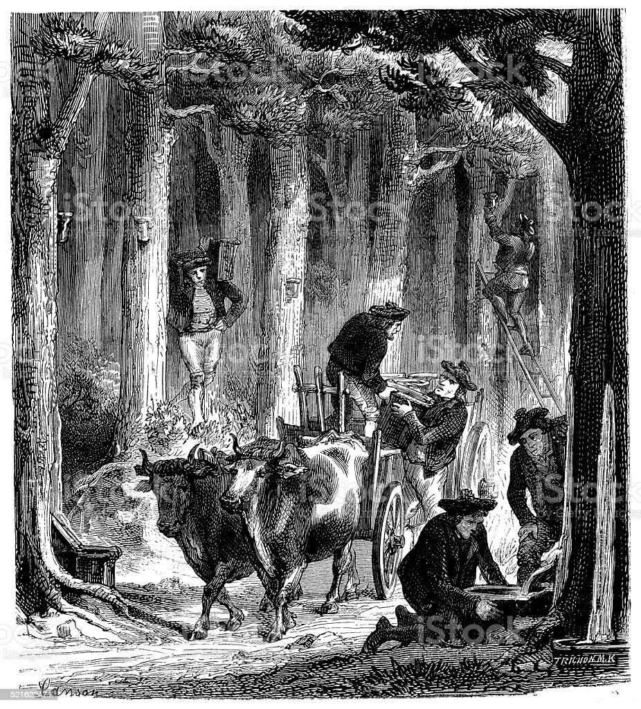 Antique illustration of Turpentine resin harvesting vector art illustration