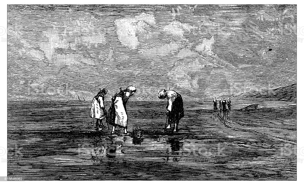 Antique illustration of women searching shellfish or angleworm on shore vector art illustration