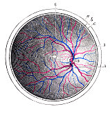Antique medical scientific illustration high-resolution: Eye retina